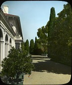 view [New Place]: the estate showing the entrance court with its towering Italian cypress and boxed Orange trees. digital asset: [New Place]: the estate showing the entrance court with its towering Italian cypress and boxed Orange trees.: [between 1914 and 1949?]