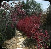 view [Skinner Garden] digital asset: [Skinner Garden]: [between 1914 and 1949?]