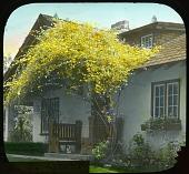 view Armour Garden digital asset: Armour Garden: [between 1914 and 1949?]
