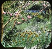 view [Morris Cohn Garden] digital asset: [Morris Cohn Garden]: 1926?