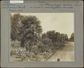 "view [Kearney Park]: Palms, Chamaerops excelsa and Erythea armata varieties digital asset: [Kearney Park] [photoprint]: The palms are Chamaerops excelsa and Erythea armata. The sign reads, ""Do not pick flowers."""