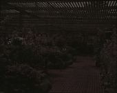 view Rosecroft Begonia Gardens digital asset: Rosecroft Begonia Gardens: 1920