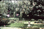 view [Untitled Garden in Hillsborough, California]: a corner of the garden done in a Chinese style. digital asset: [Untitled Garden in Hillsborough, California]: a corner of the garden done in a Chinese style.: 1965.