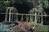 view Valentine Garden digital asset: Valentine Garden: 04/01/1989