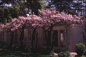 view [Schwab Garden] digital asset: [Schwab Garden]: 1996 Apr.