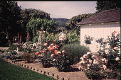 view [Dougherty Garden]: roses and garden ornaments. digital asset: [Dougherty Garden]: roses and garden ornaments.: 1996 Jul.