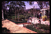 view [Bryner/Doerr Garden]: terraces. digital asset: [Bryner/Doerr Garden]: terraces.: 1994 Jul. 19.