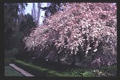 view [Magowan Garden] digital asset: [Magowan Garden]: 1997 Apr. 4.