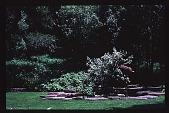 view [Magowan Garden] digital asset: [Magowan Garden]: 1996 Aug.