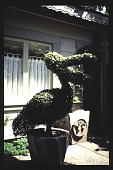 view [Mitchell Garden]: Pelican topiary. digital asset: [Mitchell Garden]: Pelican topiary.: 1997 May.