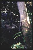 view [Mitchell Garden]: Birdfeeder. digital asset: [Mitchell Garden]: Birdfeeder.: 1997 Aug.