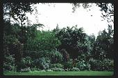 view [Volk Garden]: richness of foliage, colors, and textures of main garden. digital asset: [Volk Garden] [slide]: richness of foliage, colors, and textures of main garden.