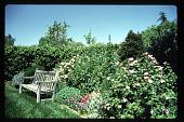 view [Volk Garden]: garden bench adjacent to perennial border. digital asset: [Volk Garden] [slide]: garden bench adjacent to perennial border.