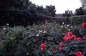view [Volk Garden]: rose garden. digital asset: [Volk Garden]: rose garden.: 1999 Apr.