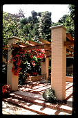 view [Untitled Garden in Hollywood, California]: bougainvillea at pergola. digital asset: [Untitled Garden in Hollywood, California] [slide]: bougainvillea at pergola.