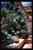 view [Untitled Garden in Hollywood, California]: corner of raised planter. digital asset: [Untitled Garden in Hollywood, California] [slide]: corner of raised planter.