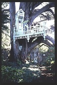 view [Thompson Garden]: victorian tree house with door shut; note glass insert in door. digital asset: [Thompson Garden]: victorian tree house with door shut; note glass insert in door.: 1996 Aug.
