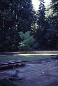view [Mountain Meadow]: the pool area, showing a frog sculpture in the foreground, a Korean dogwood in the middle distance, and redwoods in the background (southwest). digital asset: [Mountain Meadow]: the pool area, showing a frog sculpture in the foreground, a Korean dogwood in the middle distance, and redwoods in the background (southwest).: 1999 Aug.