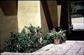 view [Untitled Garden, Pebble Beach, California]: looking from the patio toward the entry. digital asset: [Untitled Garden, Pebble Beach, California]: looking from the patio toward the entry.: 1999 Apr.