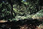 view [Untitled Garden, Pebble Beach, California]: azaleas, iris, and geophytes. digital asset: [Untitled Garden, Pebble Beach, California]: azaleas, iris, and geophytes.: 1999 Apr.