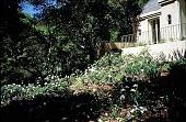 view [Untitled Garden, Pebble Beach, California]: looking back toward the house: azaleas, iris, and geophytes. digital asset: [Untitled Garden, Pebble Beach, California]: looking back toward the house: azaleas, iris, and geophytes.: 1999 Apr.