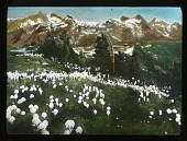 view [Canadian Rockies]: wildflowers dot the hillside, with unidentified mountains in the background. digital asset: [Canadian Rockies]: wildflowers dot the hillside, with unidentified mountains in the background.: [between 1915 and 1930]
