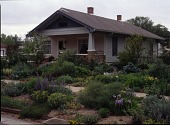 view [Lauren Springer's Windsor, Colorado Garden]: the entire lot was planted with perennials, bulbs, and shrubs. digital asset: [Lauren Springer's Windsor, Colorado Garden] [transparency]: the entire lot was planted with perennials, bulbs, and shrubs.