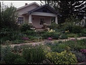 view [Lauren Springer's Windsor, Colorado Garden]: the median strip and front garden were densley planted and containers were set out on the stairs. digital asset: [Lauren Springer's Windsor, Colorado Garden] [transparency]: the median strip and front garden were densley planted and containers were set out on the stairs.