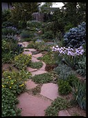view [Lauren Springer's Windsor, Colorado Garden]: in the backyard, succulents and ground cover plants filled in the spaces between the paving stones. digital asset: [Lauren Springer's Windsor, Colorado Garden] [transparency]: in the backyard, succulents and ground cover plants filled in the spaces between the paving stones.