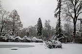 view [Oldgate]: Two notable trees seen in winter: the dawn redwood on the left and the Nordmann fir in the center of the photograph. digital asset: [Oldgate]: Two notable trees seen in winter: the dawn redwood on the left and the Nordmann fir in the center of the photograph.: 2013 Jan.