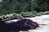 view Untitled Garden in Greenwich, Connecticut digital asset: Untitled Garden in Greenwich, Connecticut: 1990 Jun.