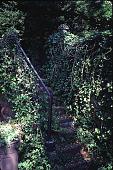 view [Contentment]: secret stair to gardens, lawn, wild gardens, and pond. digital asset: [Contentment]: secret stair to gardens, lawn, wild gardens, and pond.: 1999 Jun.