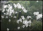 view [Van Sinderen Garden] digital asset: [Van Sinderen Garden]: [1920?]