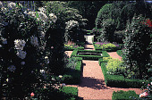 view [Cricket Hill]: the center of the parterre garden with the wrought iron gate and terrace (shown in this view are boxwood edging, Alchemilla mollis, Geranium 'Johnson's Blue', dictamus, nepeta, Cornus kousa, Rosa 'New Dawn', Rosa 'Climbing Iceberg', and... digital asset: [Cricket Hill]: the center of the parterre garden with the wrought iron gate and terrace (shown in this view are boxwood edging, Alchemilla mollis, Geranium 'Johnson's Blue', dictamus, nepeta, Cornus kousa, Rosa 'New Dawn', Rosa 'Climbing Iceberg', and scaevola in urns).: 1999 Jun.