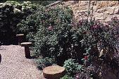 view [Windy Hill]: courtyard. digital asset: [Windy Hill]: courtyard.: 1998 Jun.