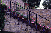 view [Windy Hill]: steps to terrace. digital asset: [Windy Hill]: steps to terrace.: 1998 Jun.
