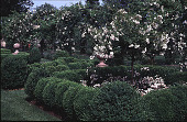 view [Windy Hill]: box parterre and rose standards. digital asset: [Windy Hill]: box parterre and rose standards.: 1999 Jul.