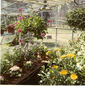 view [Northington Farm]: the greenhouse was used for growing flowers. digital asset: [Northington Farm]: the greenhouse was used for growing flowers.: 1970s.