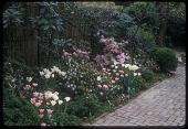 view [Herter Garden]: view of azaleas and brick walkway. digital asset: [Herter Garden] [slide (photograph)]: view of azaleas and brick walkway.