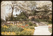 view [Les Ormes]: garden walkway lined with pansies and tulips, with stone stairs leading up to a terrace. digital asset: [Les Ormes] [slide (photograph)]: garden walkway lined with pansies and tulips, with stone stairs leading up to a terrace.