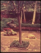 view [Phillips Garden]: brick courtyard with bushes, tree, pond, and sculpture. digital asset: [Phillips Garden]: brick courtyard with bushes, tree, pond, and sculpture.: 1953.