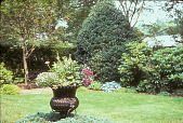 view [Harold S. Schutt, Jr. Residence]: planted black urn on evergreen ground cover in middle of lawn. digital asset: [Harold S. Schutt, Jr. Residence]: planted black urn on evergreen ground cover in middle of lawn.: 2002 Jun.