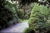 view [Harold S. Schutt, Jr. Residence]: paved driveway with evergreen shrubs and garden borders on either side. digital asset: [Harold S. Schutt, Jr. Residence]: paved driveway with evergreen shrubs and garden borders on either side.: 2002 Jun.