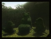 view [Seagry House]: animal tea party topiary, including a bear, probably at Seagry House. digital asset: [Seagry House]: animal tea party topiary, including a bear, probably at Seagry House.: [between 1925 and 1935]