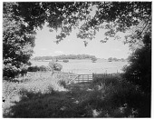 view [Miscellaneous Sites in Shere, Surrey, England, and Vicinity, Series 1]: a country scene with sheep in a field in an unidentified location. digital asset: [Miscellaneous Sites in Shere, Surrey, England, and Vicinity, Series 1] [glass negatives]: a country scene with sheep in a field in an unidentified location.