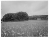view [Miscellaneous Sites in Shere, Surrey, England, and Vicinity, Series 1]: an unidentified meadow with small copses of trees. digital asset: [Miscellaneous Sites in Shere, Surrey, England, and Vicinity, Series 1] [glass negative]: an unidentified meadow with small copses of trees.