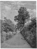 view [Miscellaneous Sites in Shere, Surrey, England, and Vicinity, Series 2]: a country lane bordered by hedgerows in an unidentified location. digital asset: [Miscellaneous Sites in Shere, Surrey, England, and Vicinity, Series 2] [glass negative]: a country lane bordered by hedgerows in an unidentified location.