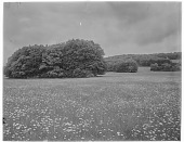 view [Miscellaneous Sites in Shere, Surrey, England, and Vicinity, Series 2]: an unidentified meadow with small copses of trees. digital asset: [Miscellaneous Sites in Shere, Surrey, England, and Vicinity, Series 2] [glass negatives]: an unidentified meadow with small copses of trees.