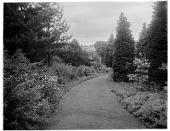 view [Unidentified Garden in England]: an unidentified garden walkway bordered by perennials and evergreens. digital asset: [Unidentified Garden in England] [glass negative]: an unidentified garden walkway bordered by perennials and evergreens.
