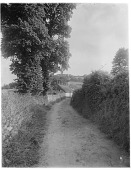 view [Miscellaneous Sites in Branscombe, Devon, England]: a village lane in Branscombe. digital asset: [Miscellaneous Sites in Branscombe, Devon, England] [glass negative]: a village lane in Branscombe.